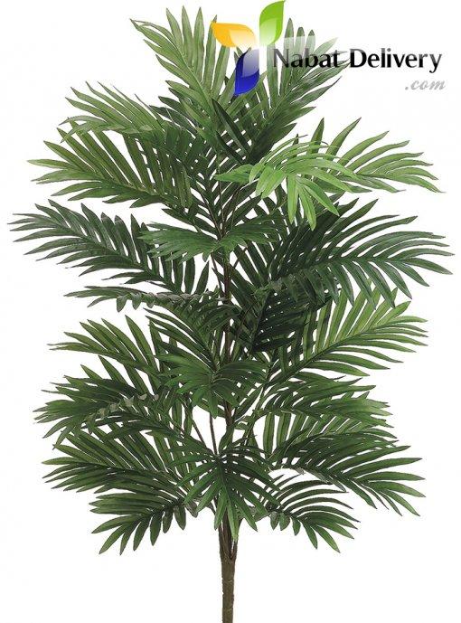 Areca Palm ( small size)