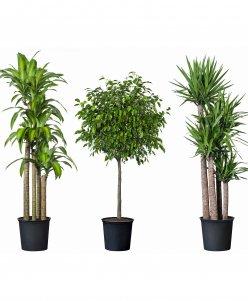 ِArtificial Plants