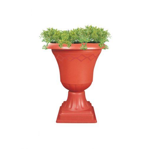 كأس بلازا بنى نبات
