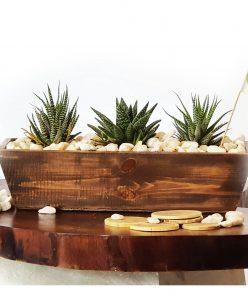 Wooden cactus pot nabatdelivery