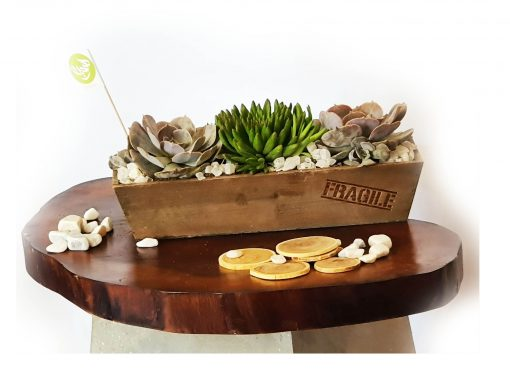 Cactus Plant Container nabatdelivery