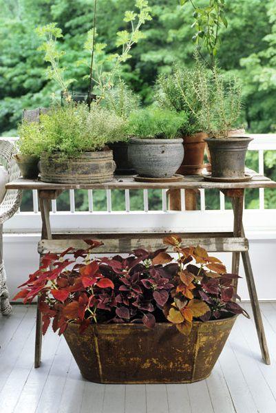 تصميمات نبات