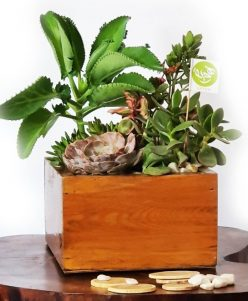 Wood cactus planter nabatdelivery