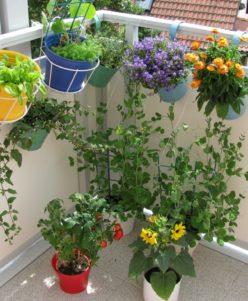 Balcony Design Plants
