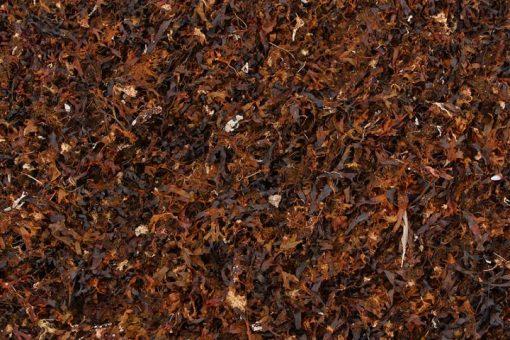 """Compost """"Nile Compost – Ecaru"""" Nabat delivery"""