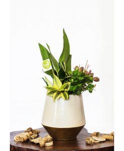Cactus air purifier off white pot https://nabatdelivery.com/