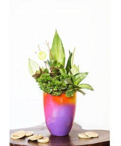 nabatdelivery Colorful pot with indoor plants