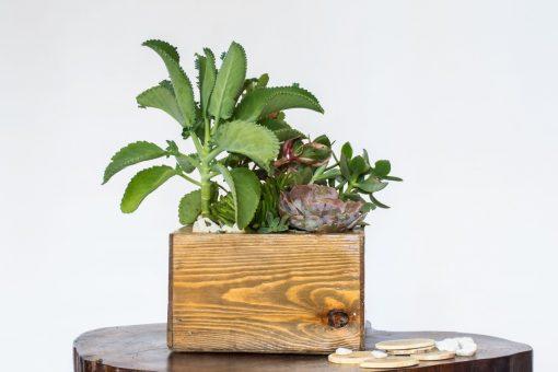 Wood cactus planter nabatdelivery