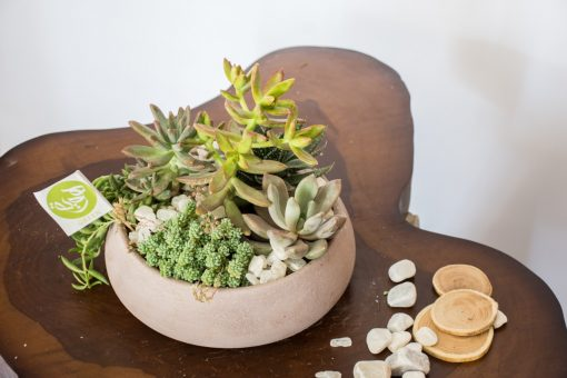 Succulents with pot nabatdelivery