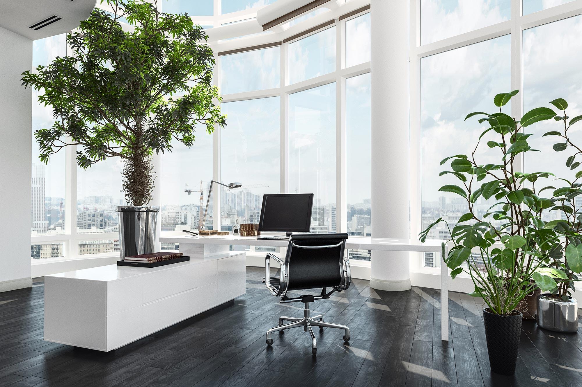 Office Indoor plants